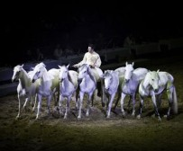 lord_of_horses_01