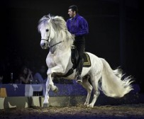 lord_of_horses_02