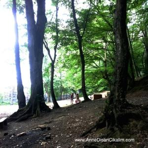 Belgrad ormanlari cocuklar oyun oynuyor