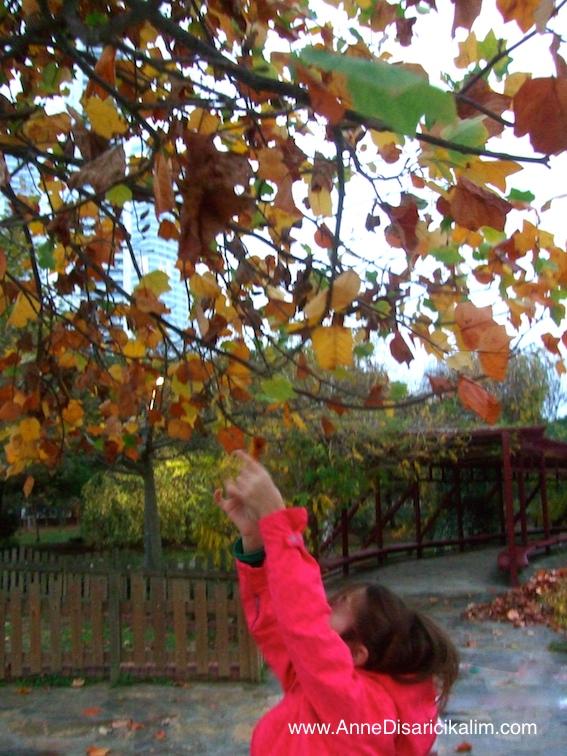 sonbahar etkinligi: sari yaprak toplama