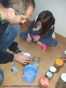 tohumlar diatomit toprak ve kedi kumunun altında